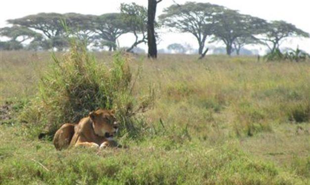 Een unieke en veelzijdige vakantie in Tanzania