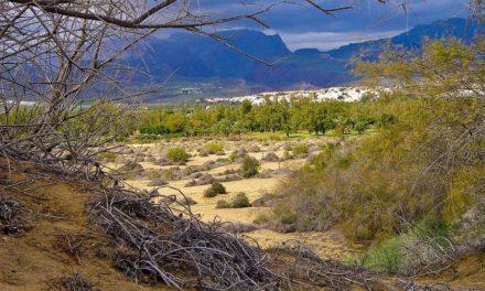 Gran Canaria, het eiland van de amandelen, dadels en drakenbloemen