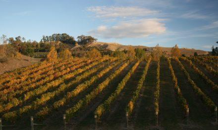 De vier bijzonderste wijngebieden in Nieuw-Zeeland