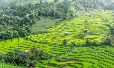 Weg van het massatoerisme ontdek je het echte Thailand