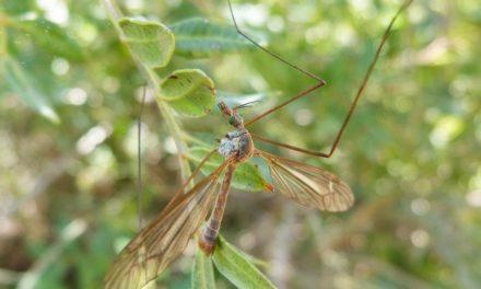 Tips om je te beschermen tegen muggen