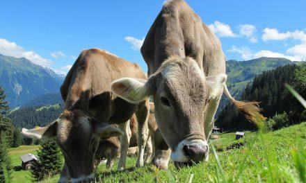 Oostenrijk: een onbekende bestemming voor de zomer
